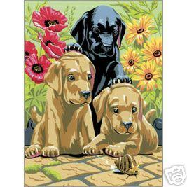 pbn lab puppies a4